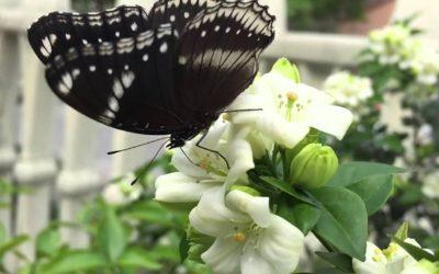My Garden's Secret